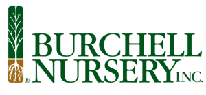 Logo - The Burchell Nursery