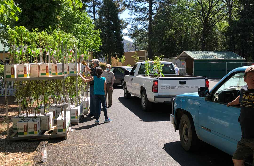 Paradise California Tree Giveaway Burchell Nursery Give and Grow Hope